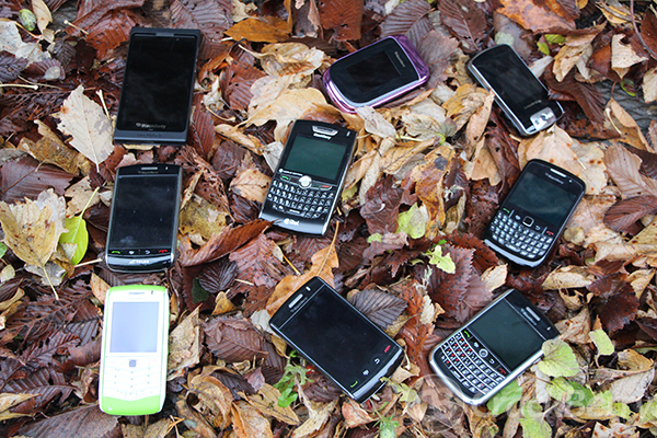 blackberry-loss