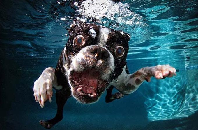 Su altı fotoğrafçısının objektifinden köpekler