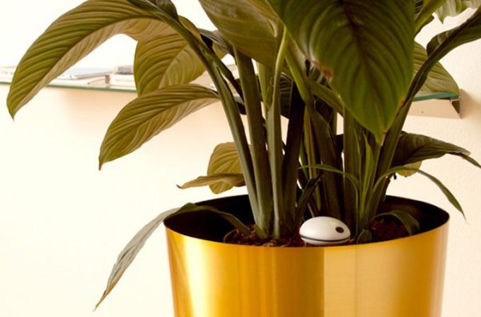 Wi-Fi sinyalleri bitki solduruyor