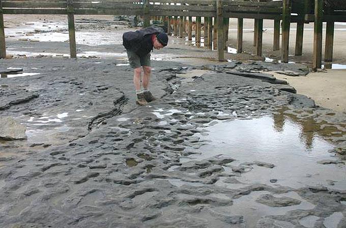 İngiltere'de milyon yıllık ayak izleri bulundu
