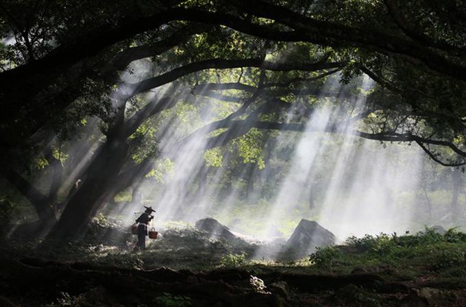 Galeri: National Geographic Fotoğraf Yarışması'nda dikkat çeken fotoğraflar