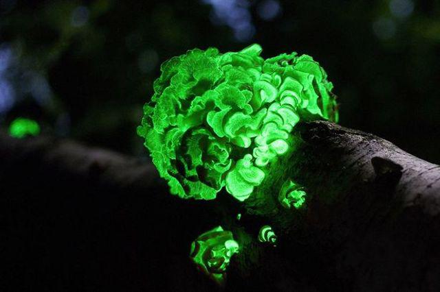 Parlayan ağaçlarla geceleri şehri aydınlatmak