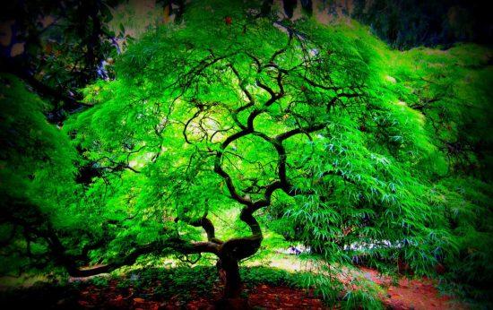 parlayan-aga.---glowing-tree---teknoloji