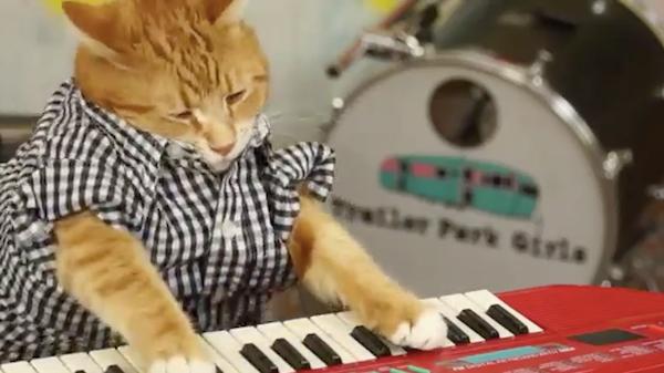 Video: İnternet fenomeni kedi geri döndü!