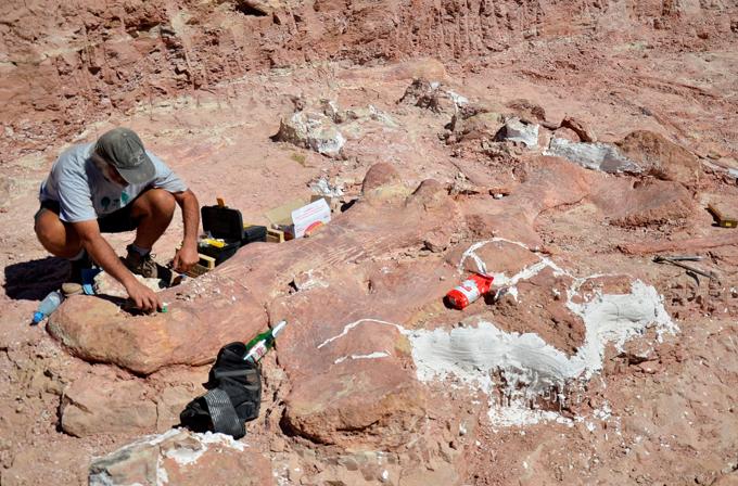 Gelmiş geçmiş en büyük dinozor keşfedildi