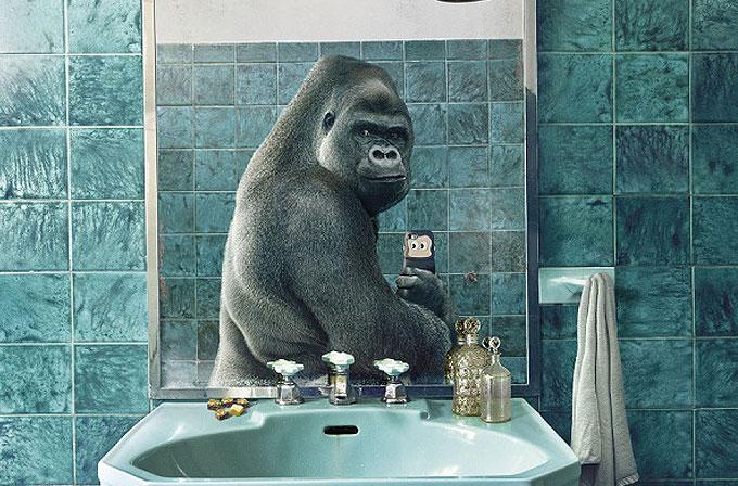 Galeri: Selfie akımına kapılan tatlı hayvanlar