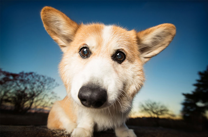 Galeri: Bu köpekler bir harika dostum!