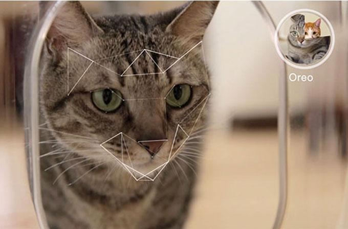 Kediler için akıllı beslenme ünitesi: Bistro