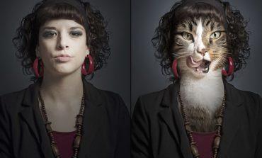 Galeri: Bir kediniz olsa nasıl giyinirdi ?