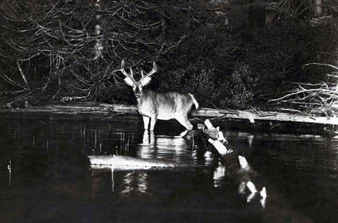 National Geographic'in yayınladığı ilk vahşi doğa fotoğrafları