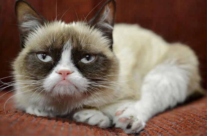 Grumpy Cat sahibini zengin etti