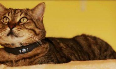 petTracer ile kediniz artık kaybolmayacak