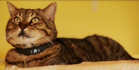 20141111061951-petTracer_Collar_on_Cat