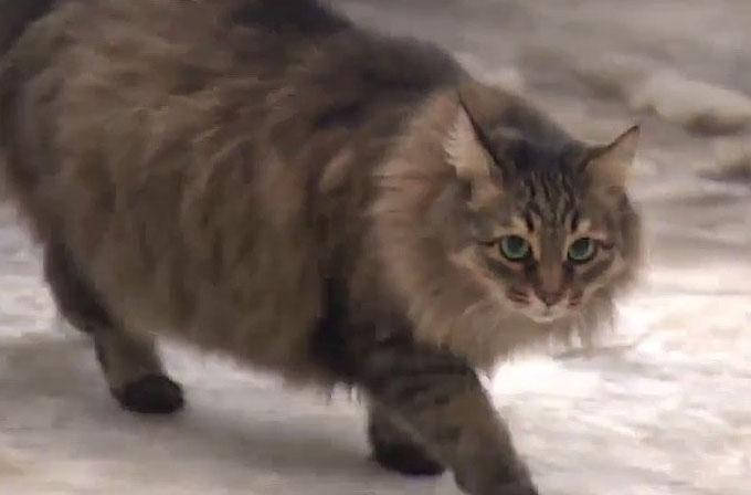 Bebeğin hayatını kurtaran kahraman kedi Masha