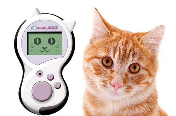 """Meowlingual """"kedi çevirmeni"""" kedileri anlamanızı sağlayacak"""