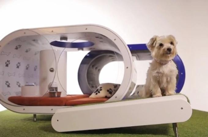 Samsung'dan 30,000$'lık Dream Doghouse köpek kulübesi