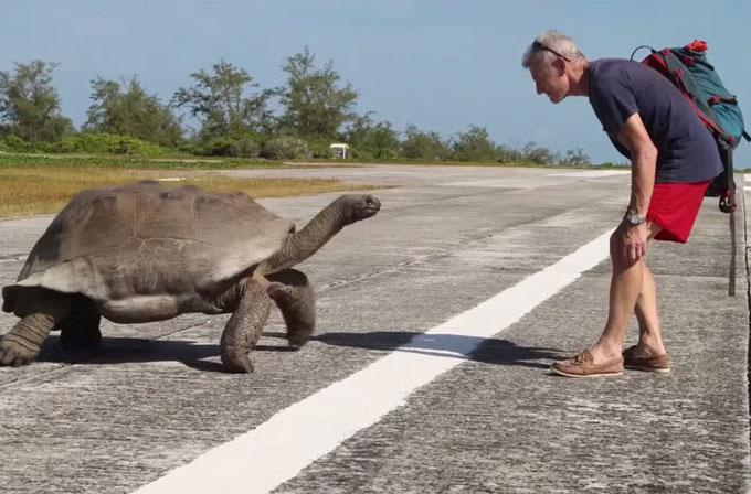 Bir kaplumbağanın seksini bölerseniz nolur? Çok, çok yavaş bir kovalama…