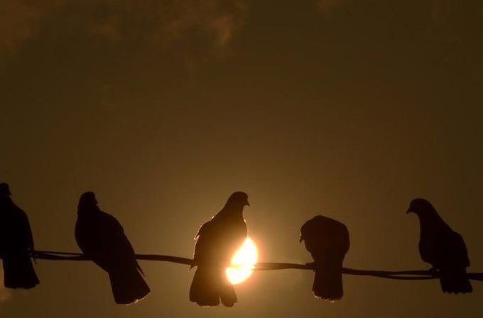 """Hint polisi casus şüphesi ile bir """"güvercin"""" tutukladı!"""