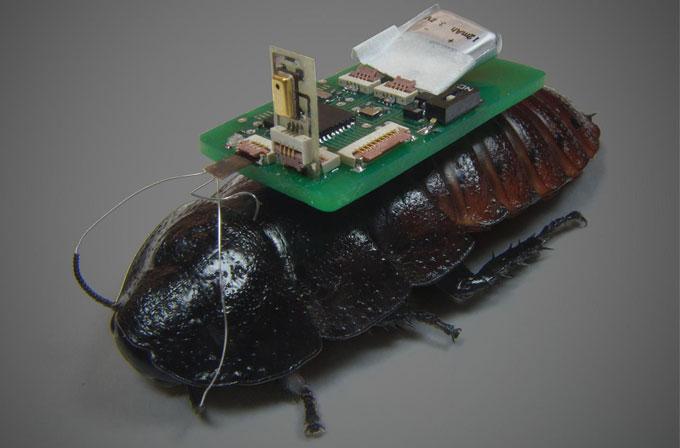 Türk bilimadamından hayat kurtaracak buluş: Cyborg hamamböceği