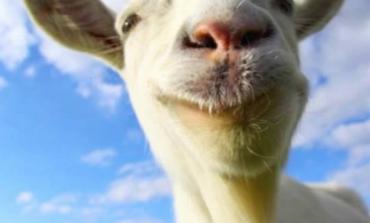 Goat Simulator PlayStation versiyonunun çıkış tarihi açıklandı
