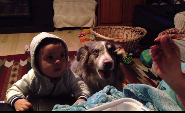 """Bebekten önce """"anne"""" demeyi başaran köpek"""